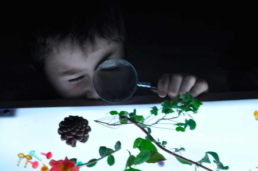 Niño observando elementos naturales en una mesa de luz